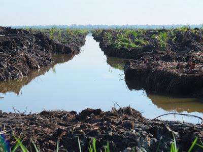 8 Jenis Tanah di Indonesia