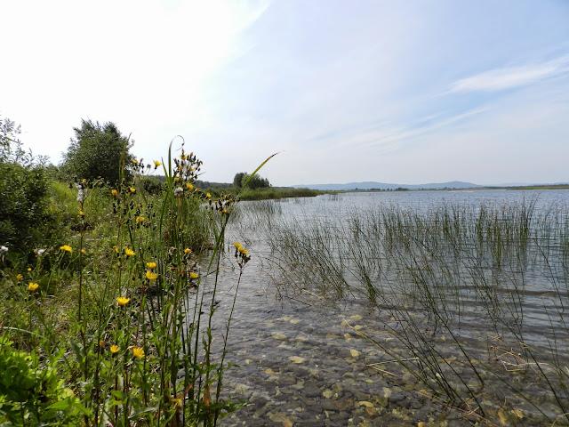 Желтые цветы у озера Малые Касли