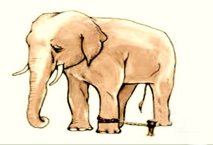 The Elephant Rope [ Story ]   Inspiring Youth Stories