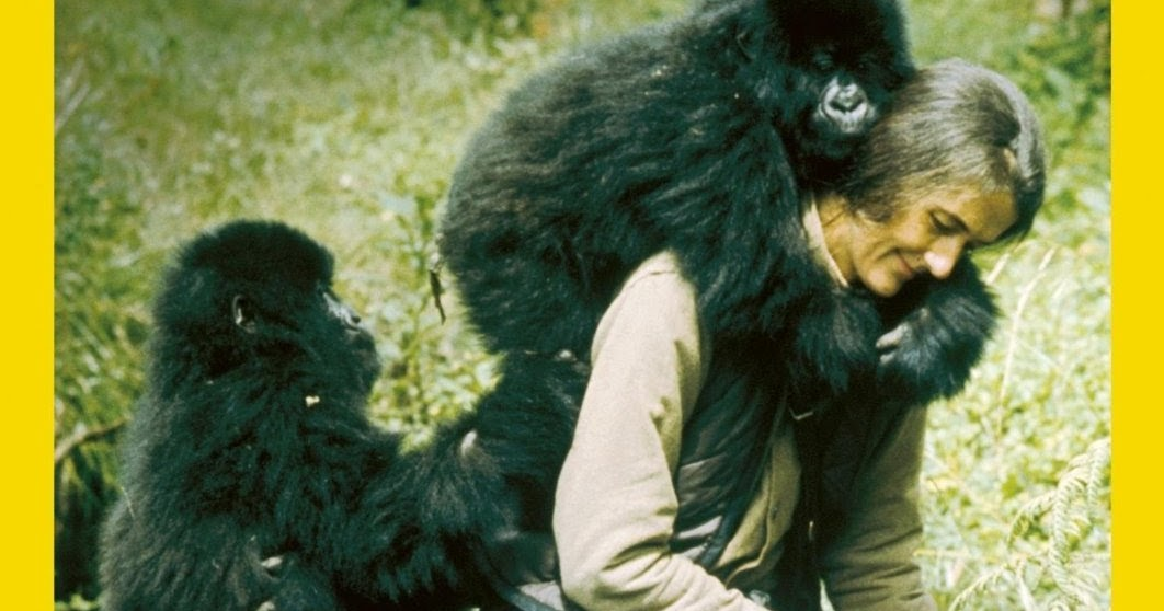 Thekongblog Gorillas In The Mist Dian Fossey S Legacy