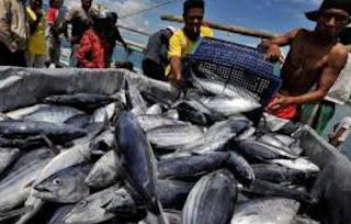 tubuh Karantina Ikan Pengendalian Mutu dan Keamanan Hasil Perikanan  Kabar Terbaru- SYARAT INTERNAL EKSPOR PRODUK PERIKANAN