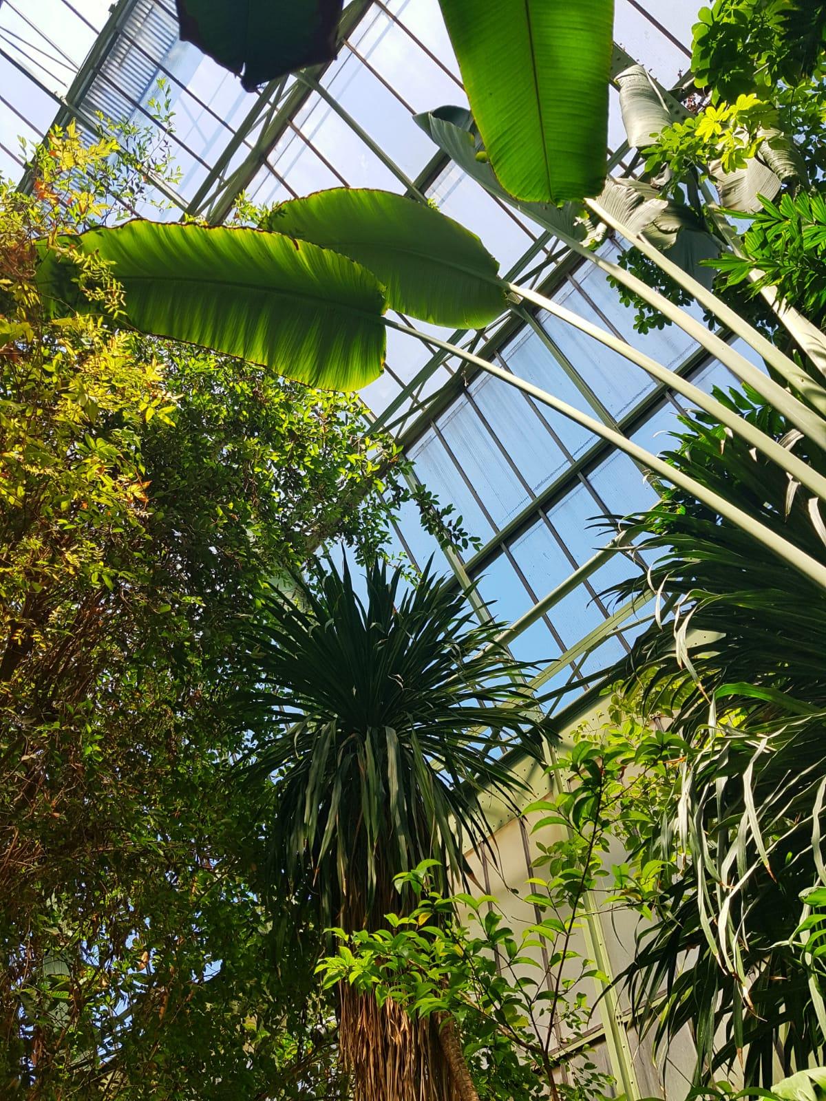 Jardin Des Plantes Paris greenhouse