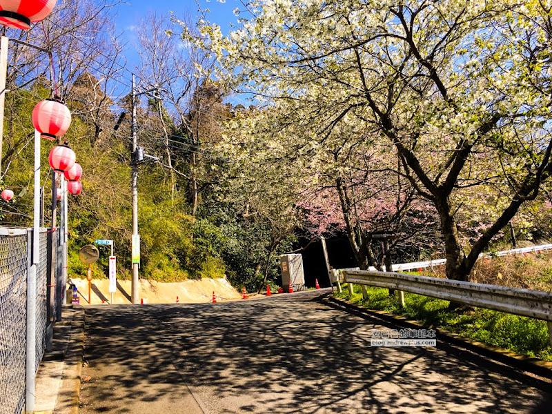 matsuda-sakura-4.jpg