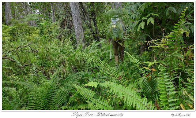 Napau Trail: Without earmarks