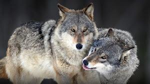 Lugares de interés histórico - El Chorco de los Lobos