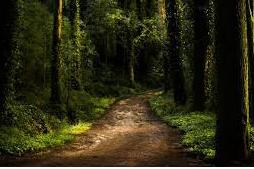Cerita misteri : Hutan dijalan buntu part 1