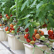 Hydroponics, Aquaponics, and Aeroponics for the DIY gardener ~ Green Iowa Energy