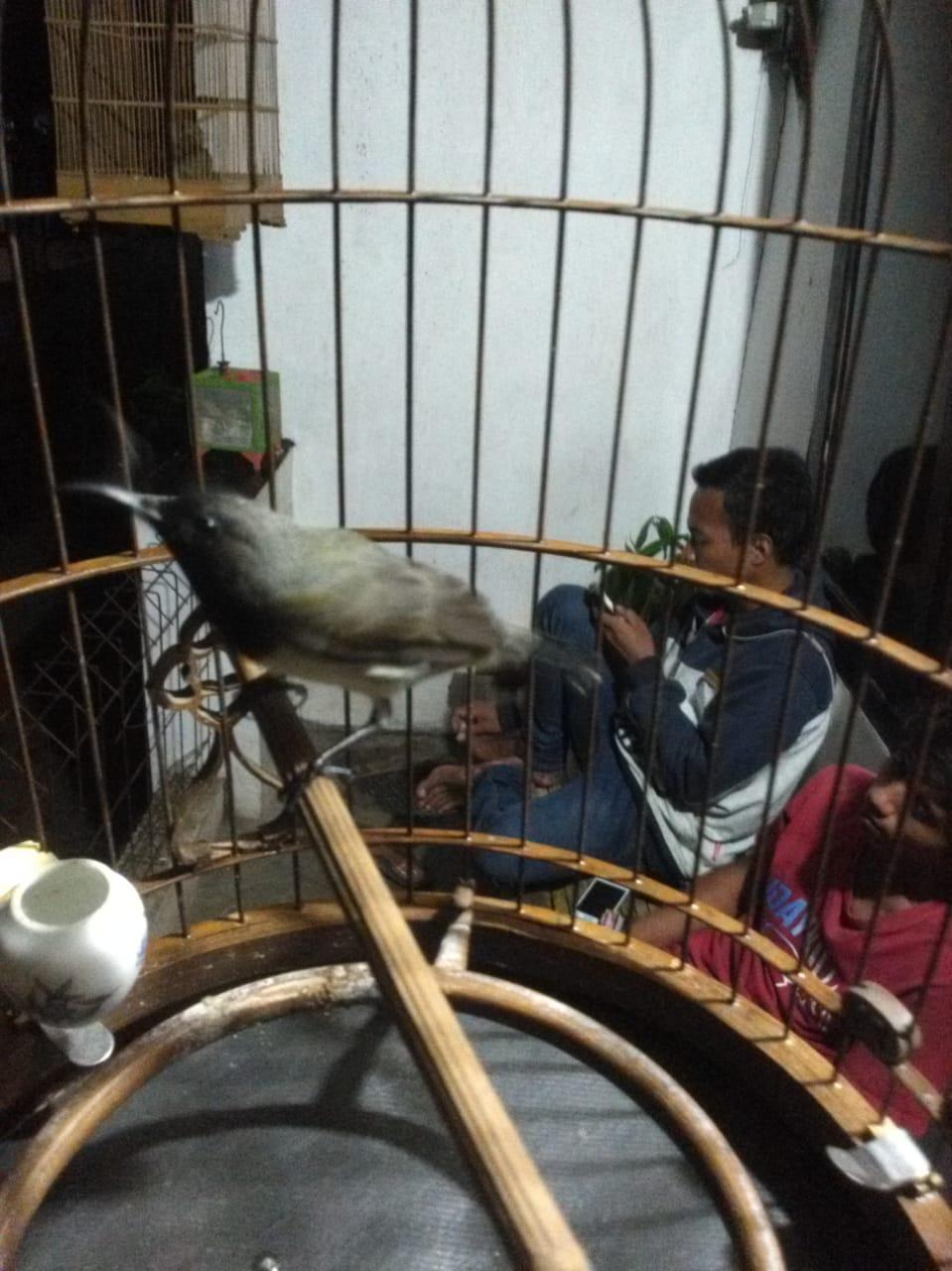 Prediksi Burung Madu Sriganti Sogon Mulai Melejit Nama Dan Harganya Di Tahun 2019 Dan Akan Terus Meningkat Hingga Tahun 2020 Tips Dan Bisnis Seputar Burung