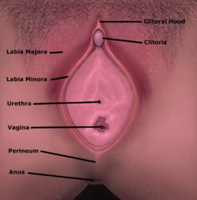 Cara Mengatasi Penyebab Gatal Pada Alat Kelamin Wanita (Female Genital)/Vagina