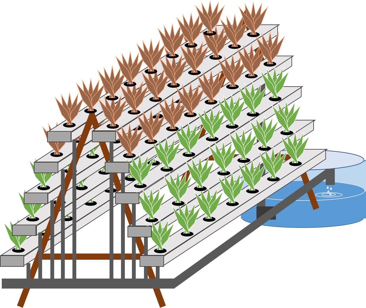 Prinsip Pembuatan Hingga Suka Dukanya Hidroponik NFT