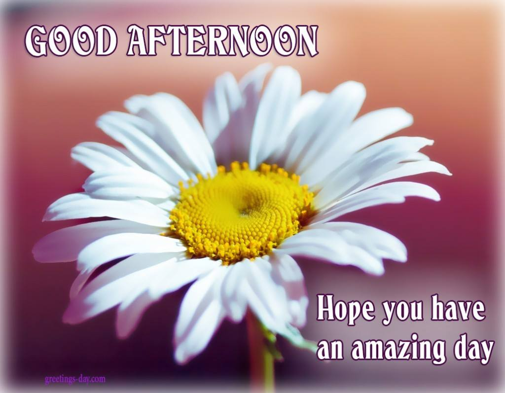 Good Afternoon Messages With Images Photos Dp Thephotoimages