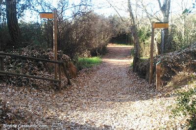 Bosc de ribera amb cartells indicadors