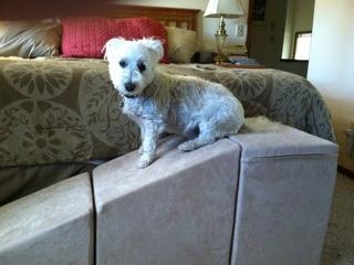 cama box rampa para cães em hotéis