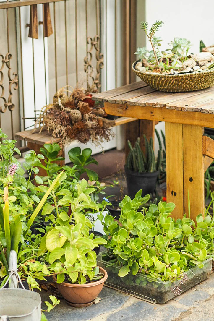 Pot plants and wooden table