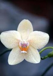 Koleksi Gambar Jenis Bunga Anggrek di Dunia