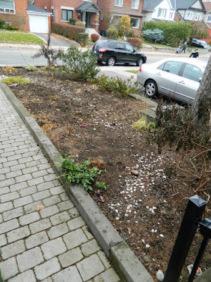 Toronto Fall Clean up Bedford Park Front Garden after by Paul Jung Gardening Services