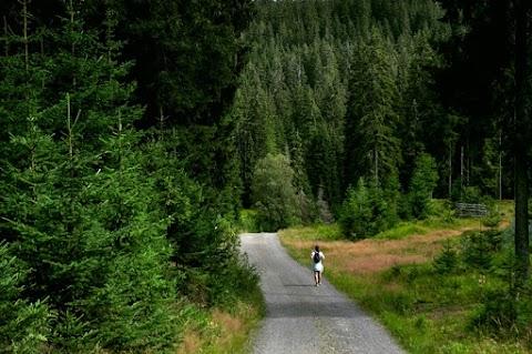 Odpočinek v šumavských lesích