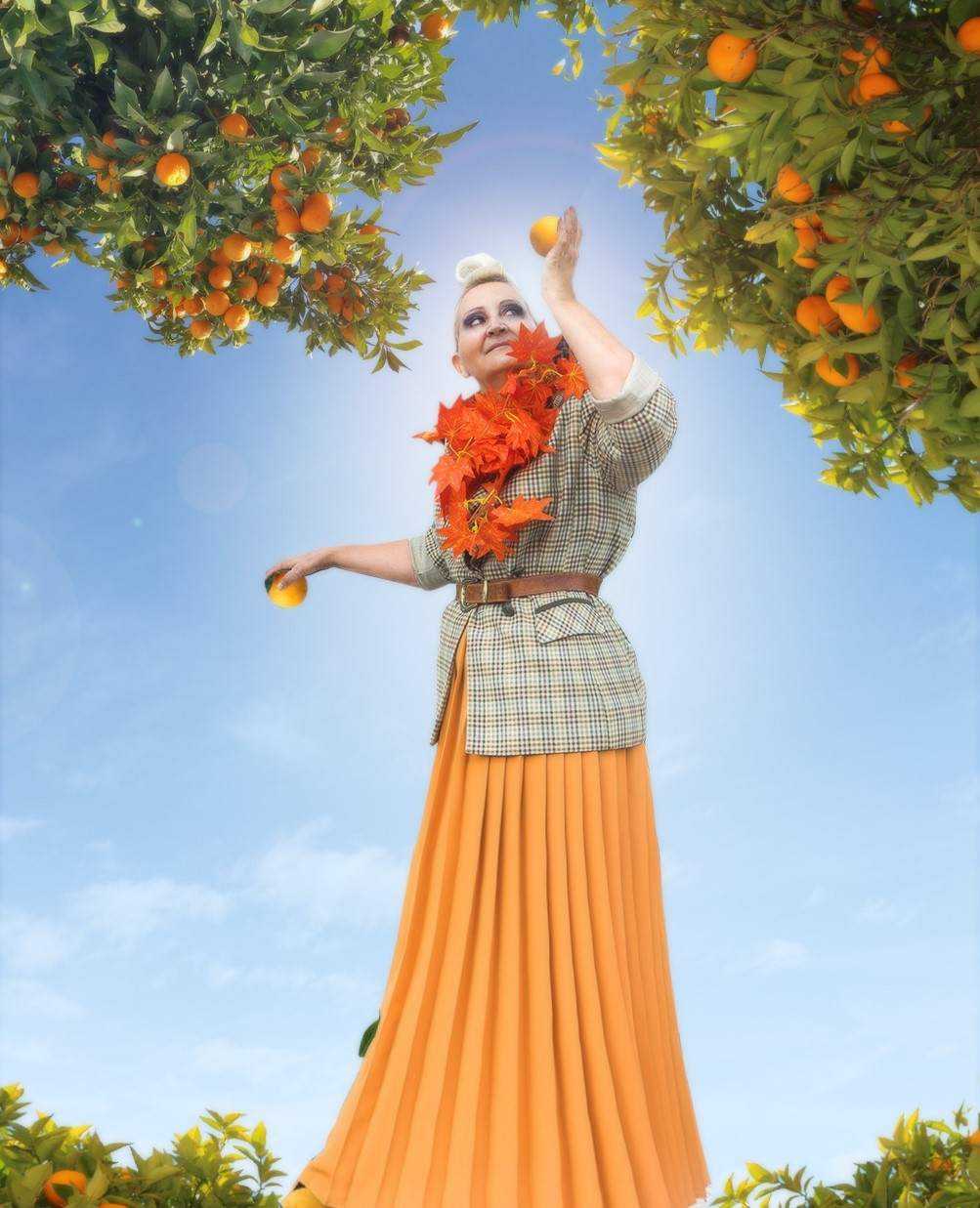Picking the Last Oranges Before Summer