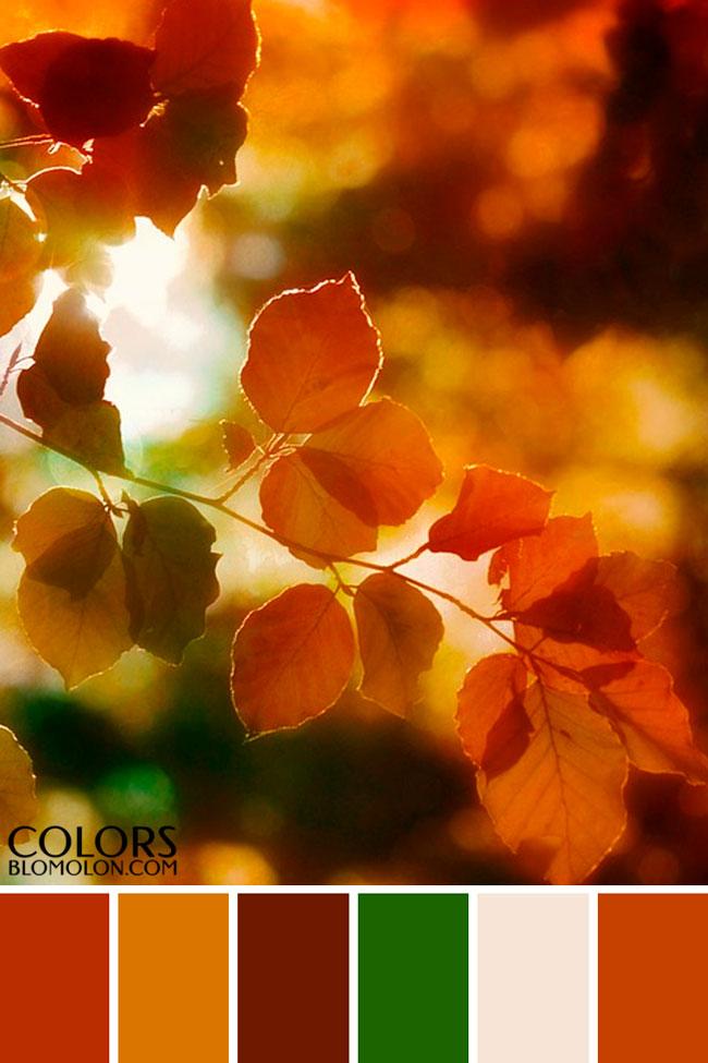 paletas_de_colores_variedad_de_temporada_3