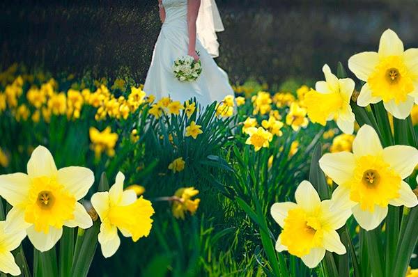 Flores-na-Holanda