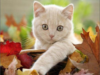 offwhite-cute-billi-catkitten-images