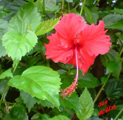 Riang Raya. Foto Bunga. Natural itu Cantik.