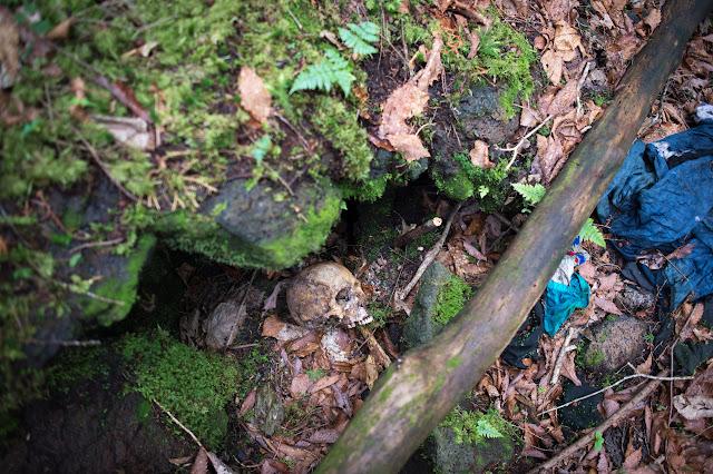 hutan aokigahara di jepang yang sangat seram dan angker dipenuhi oleh hantu