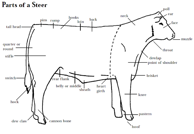 learning to judge 4-h livestock judging programs: how to ... diagram of beef cattle diagram of beef cattle #3