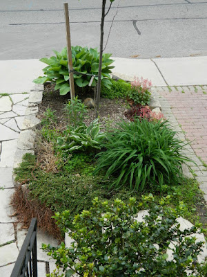 New front garden perennial bed in Wychwood before by Paul Jung Gardening Services--a Toronto Gardening Company