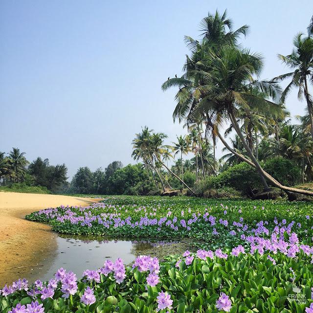 palmeras y flores en kasaragod india