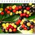 Manfaat buah buni untuk kesehatan tubuh (Ada 12 yang wajib anda tahu)