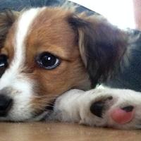 third child or puppy