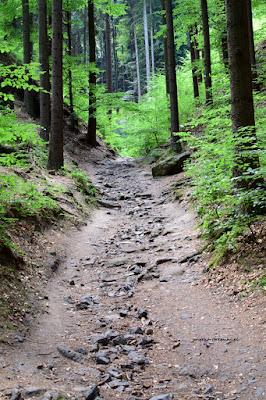 Hruboskalsko szlak od źródeł w kierunku Arboretum