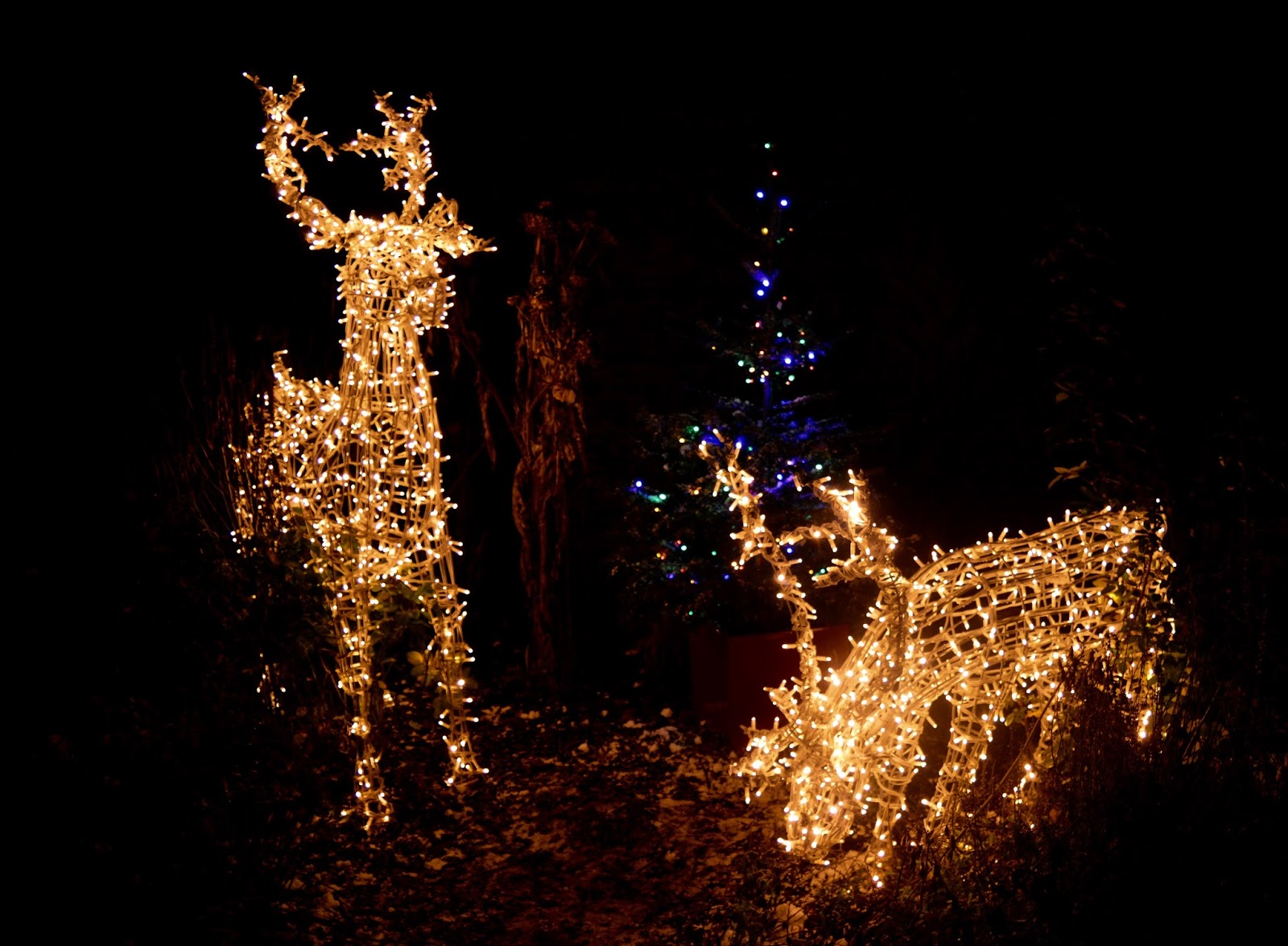 Winter Wonderland Christmas Light Show | A Wynyard Hall Garden Event - A Review - illuminated reindeer