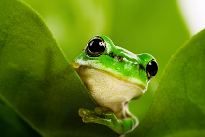 """Résultat de recherche d'images pour """"une grenouille qui rêve"""""""