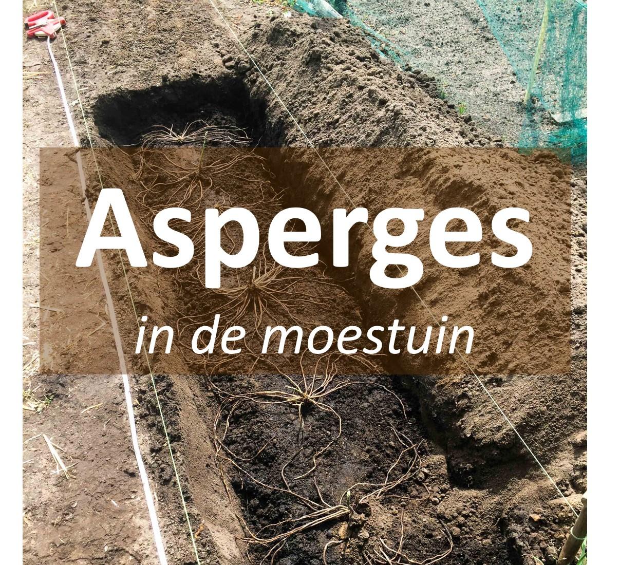 asperges in de moestuin aspergebed aanleggen