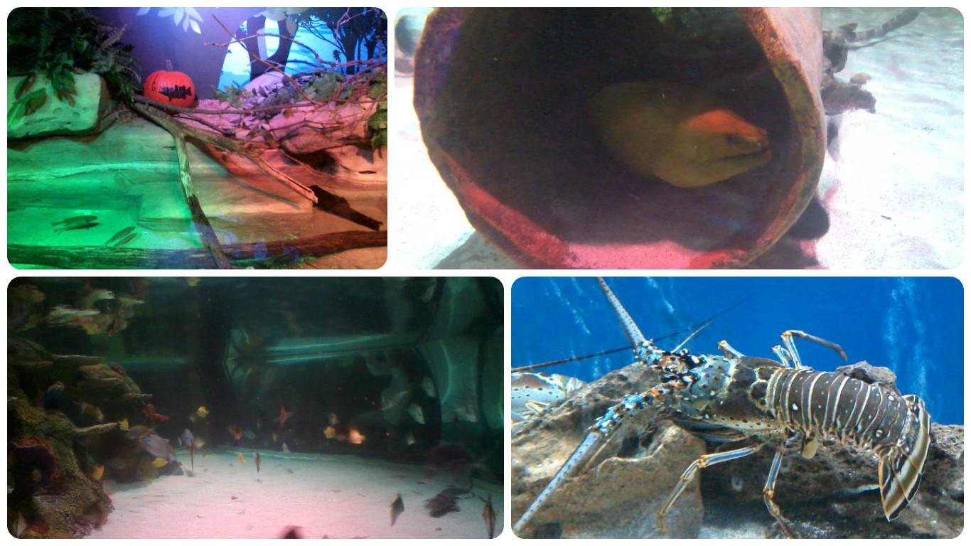 Life From Ann Arbor Sea Life Michigan Aquarium
