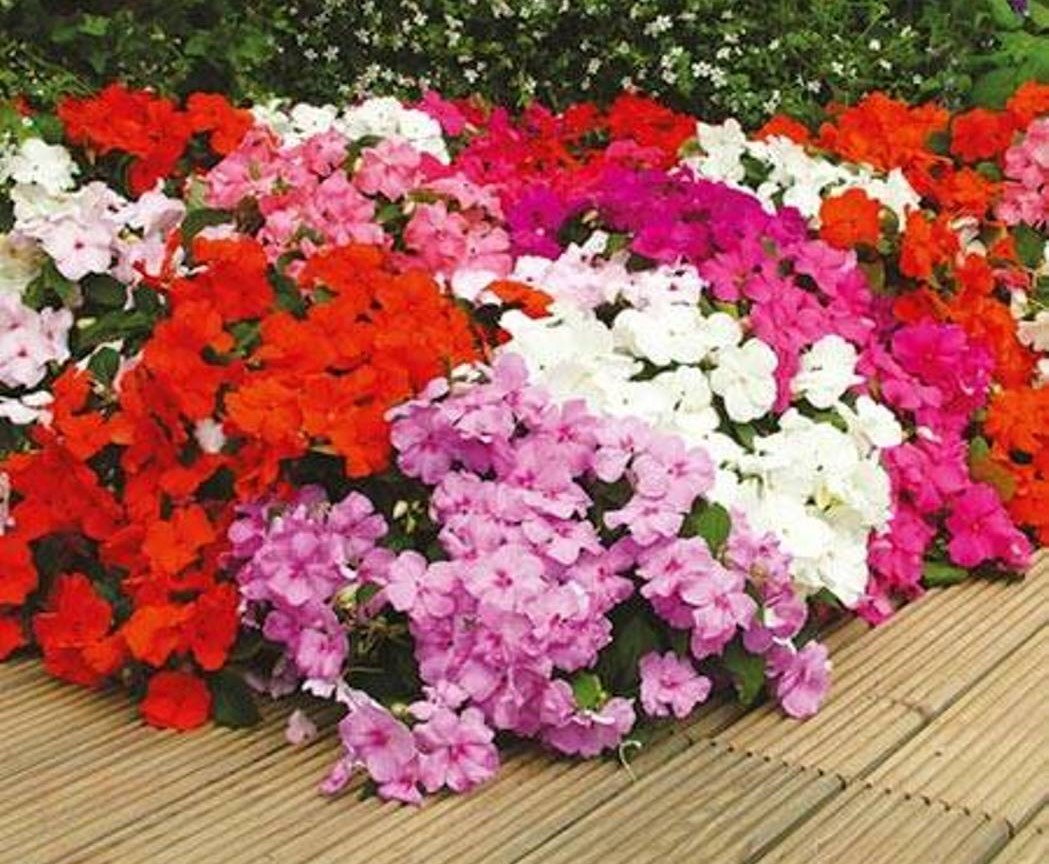 SLUG RESISTANT BEDDING PLANTS The Garden of Eaden