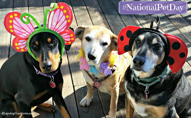 3 rescued dogs ready for spring national pet day