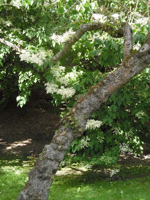 pochylone drzewo w ogrodzie japońskim