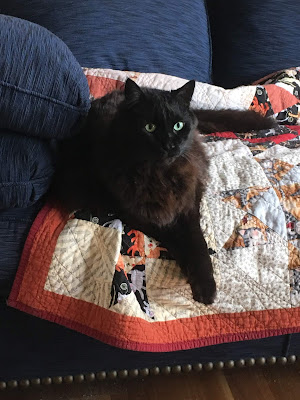 large black cat on a quilt on a couch