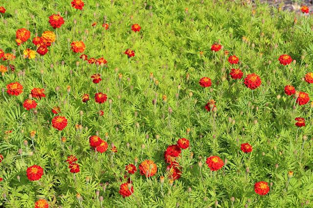wild flower painting