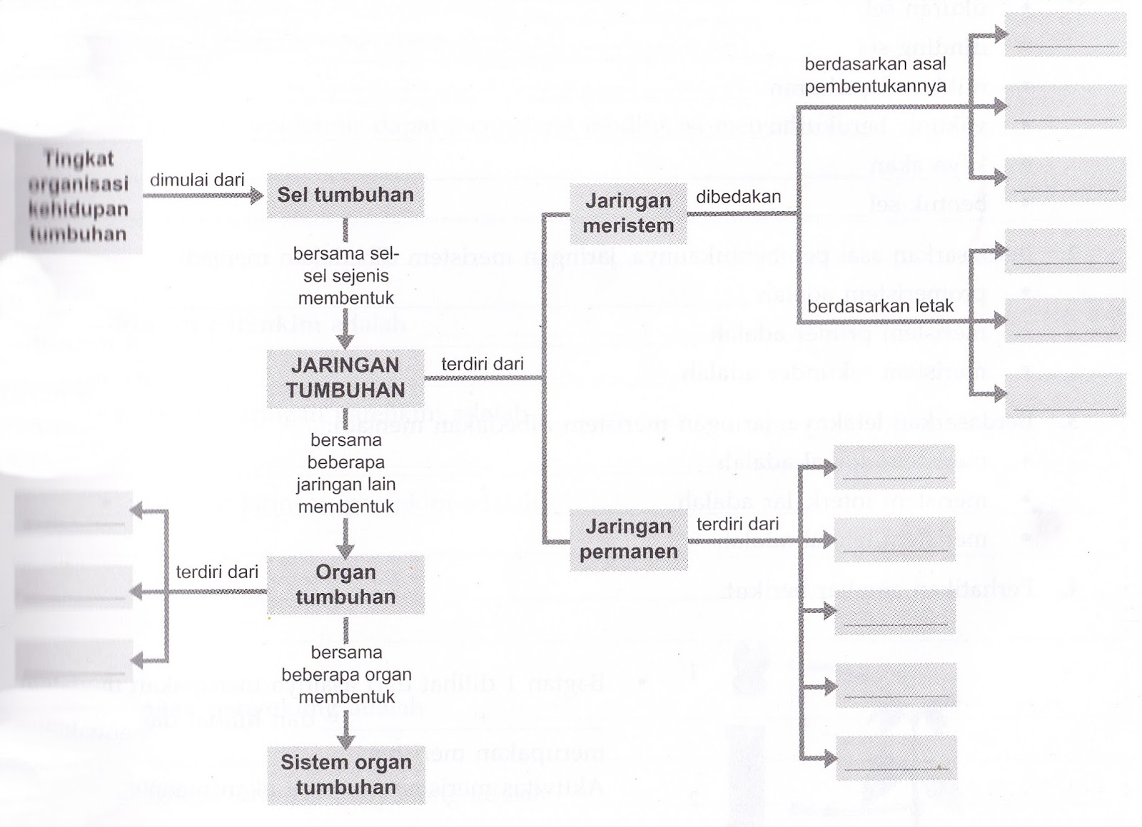 Remarkable of biology peta konsep sel struktur dan fungsi struktur dan fungsi jaringan pada tumbuhan ccuart Choice Image