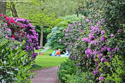 Picknick zwischen den Rhododenren im Hamburger Stadtpark
