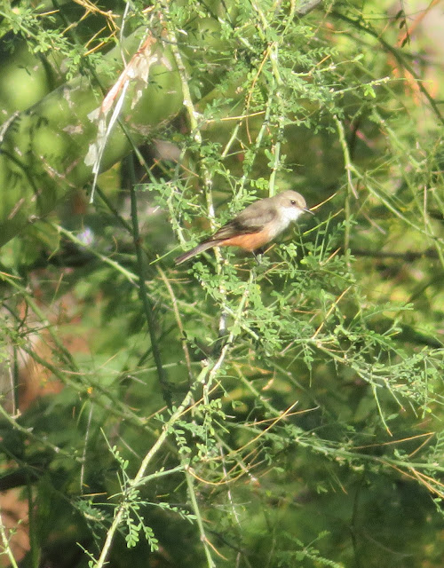 Identification of Migrating Birds in Coachella Valley