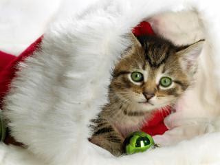 Mačka kao Božićni poklon download besplatne pozadine slike za mobitele