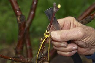 Заговоры для ухода за растениями