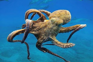 dream about octopus meaning