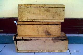 3-jenis-lebah-trigona-apis-dorsata-cerana