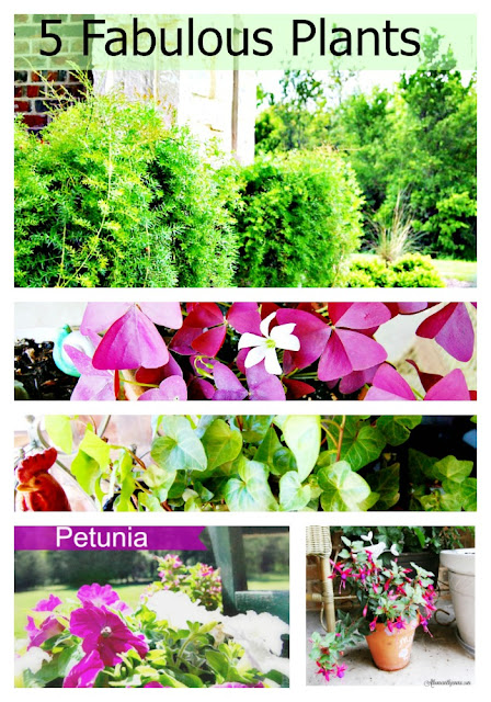 gardening in containers with petunias, fushcia plant, ferns, purple shamrock and petunias